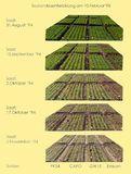 Die Erträge von drei Winterweizensorten in Abhängigkeit von Saatzeitpunkt aus dem Jahr 1994/95.