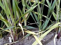 Vertrocknete Pflanzen